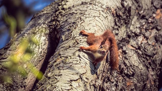 Eichhörnchen - Teil 1