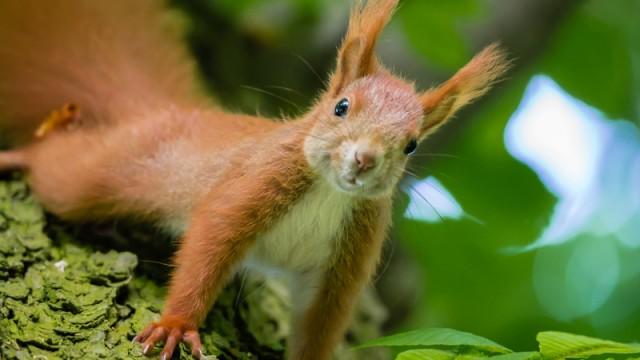 Eichhörnchen - Teil 3