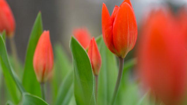 Frühling - Teil 1