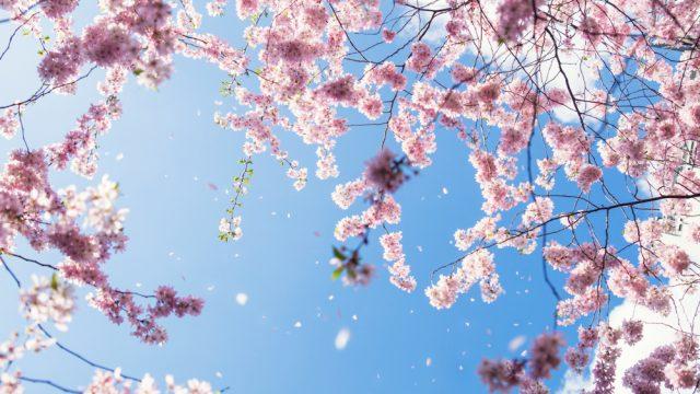 Frühling - Teil 2