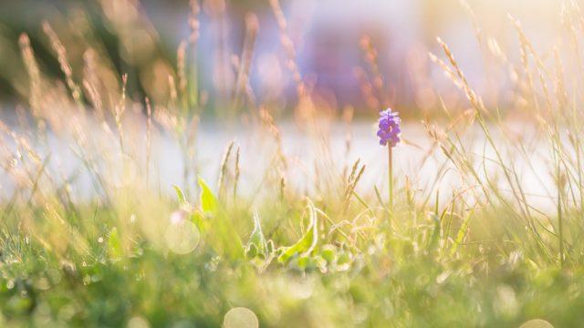 Frühling - Teil 3