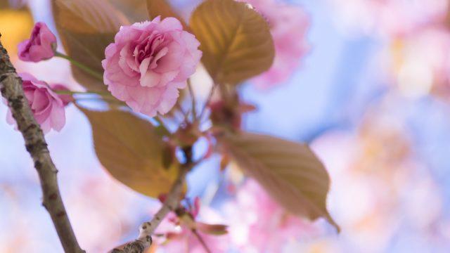 Frühling - Teil 5