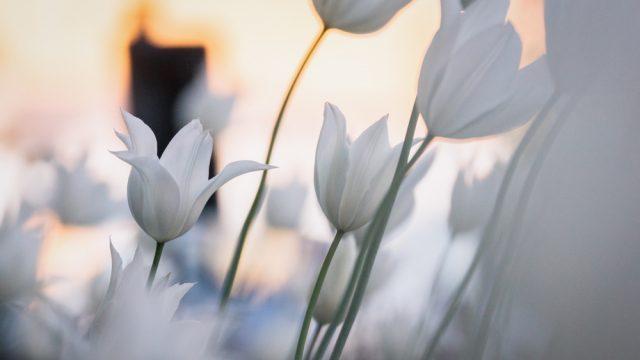 Frühling - Teil 6