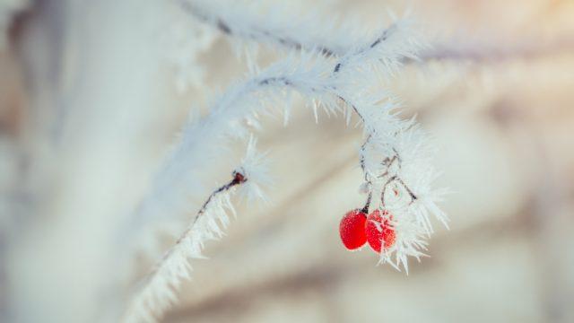 Frostiger Morgen - Teil 1