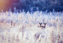 Frostiger Morgen - Teil 2