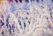 Frostiger Morgen - Teil 3