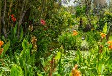 La Isola Verde - Ischia - Teil 7