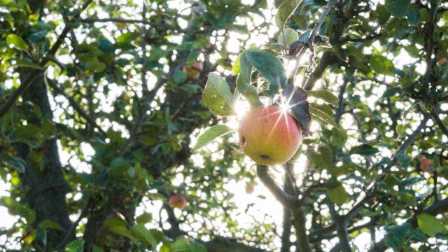 Herbst im Anmarsch - Teil 1