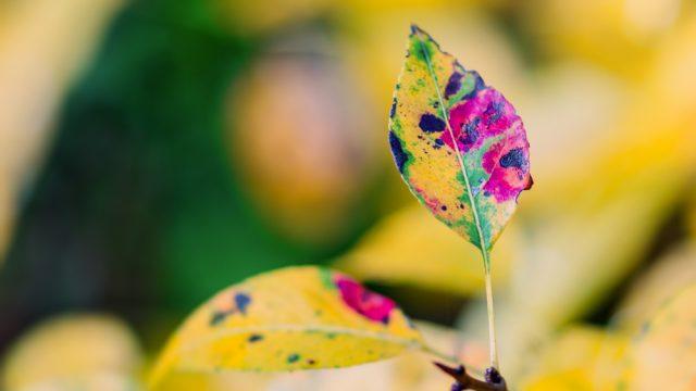 Herbst im Anmarsch - Teil 2